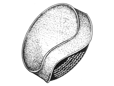 Product info as well Princess Daisy Kleurplaat also 84 Cavalier Wiring Diagram also  on 2012 vw beetle floor mats